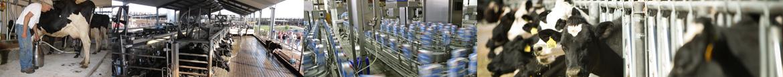 Dairy-Farm-Recruitment-Services